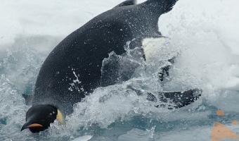Pinguini in vacanza!